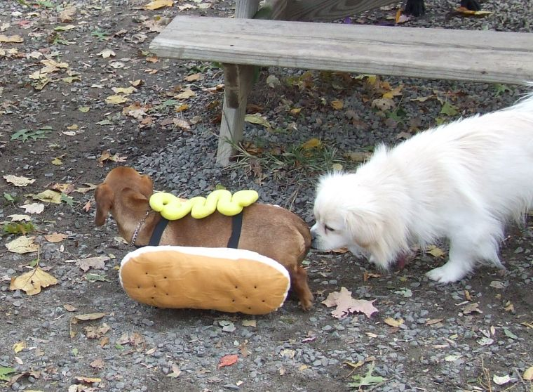 There is always a Hot Dog!